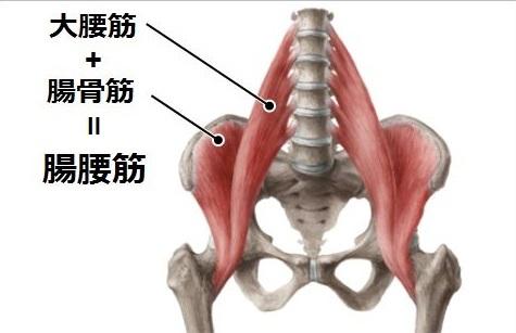 椎間板ヘルニアや脊柱管狭窄症が痛みやしびれの原因になることは決してない_b0052170_02414676.jpg