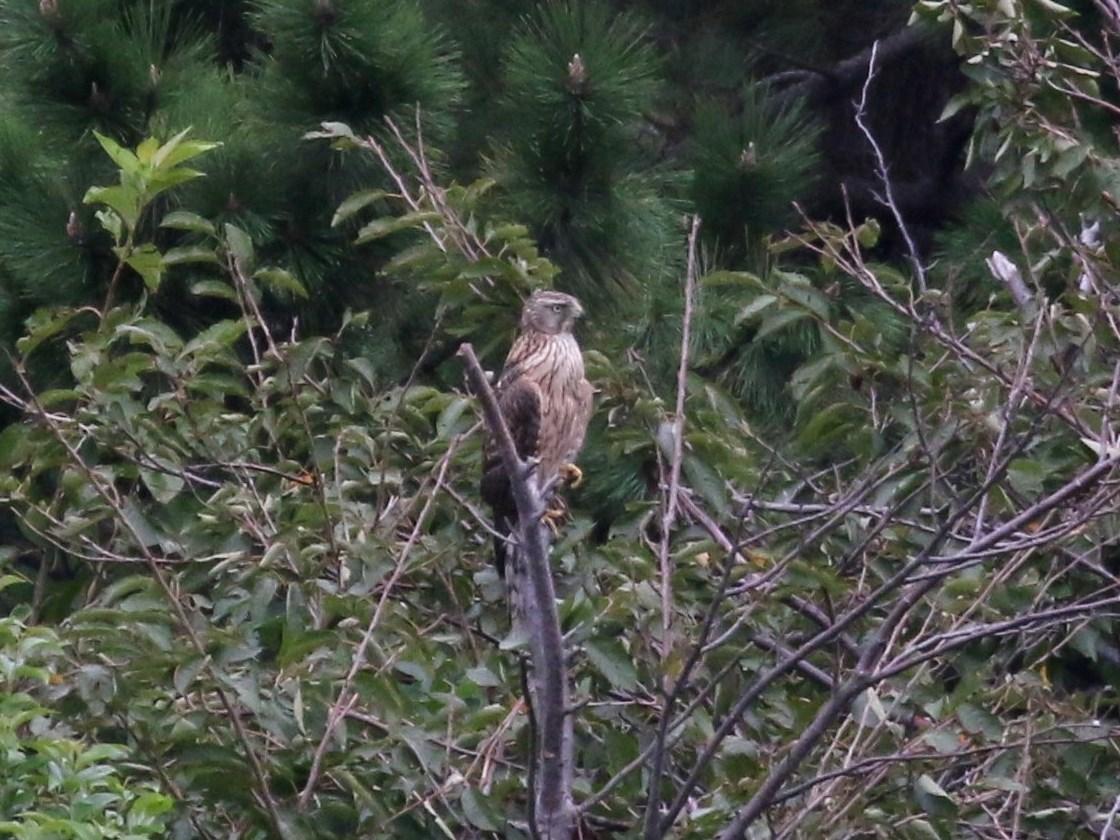 強風でも鳥はたくさん・・・★先週末の鳥類園(2019.9.21~23)_e0046474_15252070.jpg