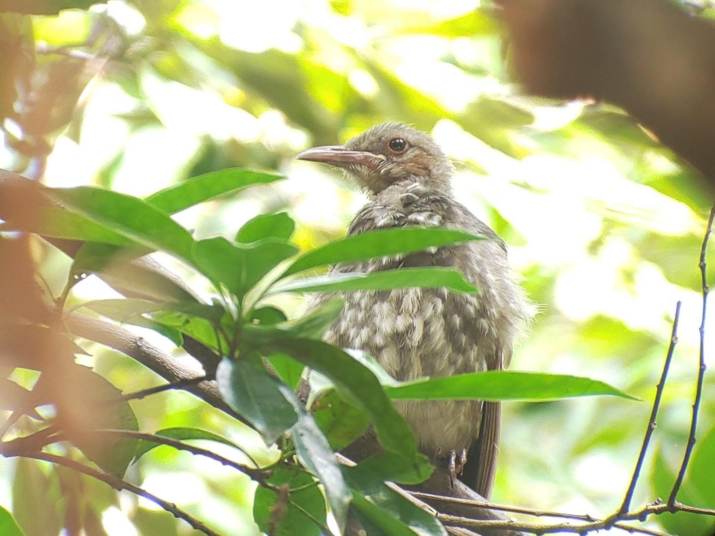 強風でも鳥はたくさん・・・★先週末の鳥類園(2019.9.21~23)_e0046474_15253427.jpg