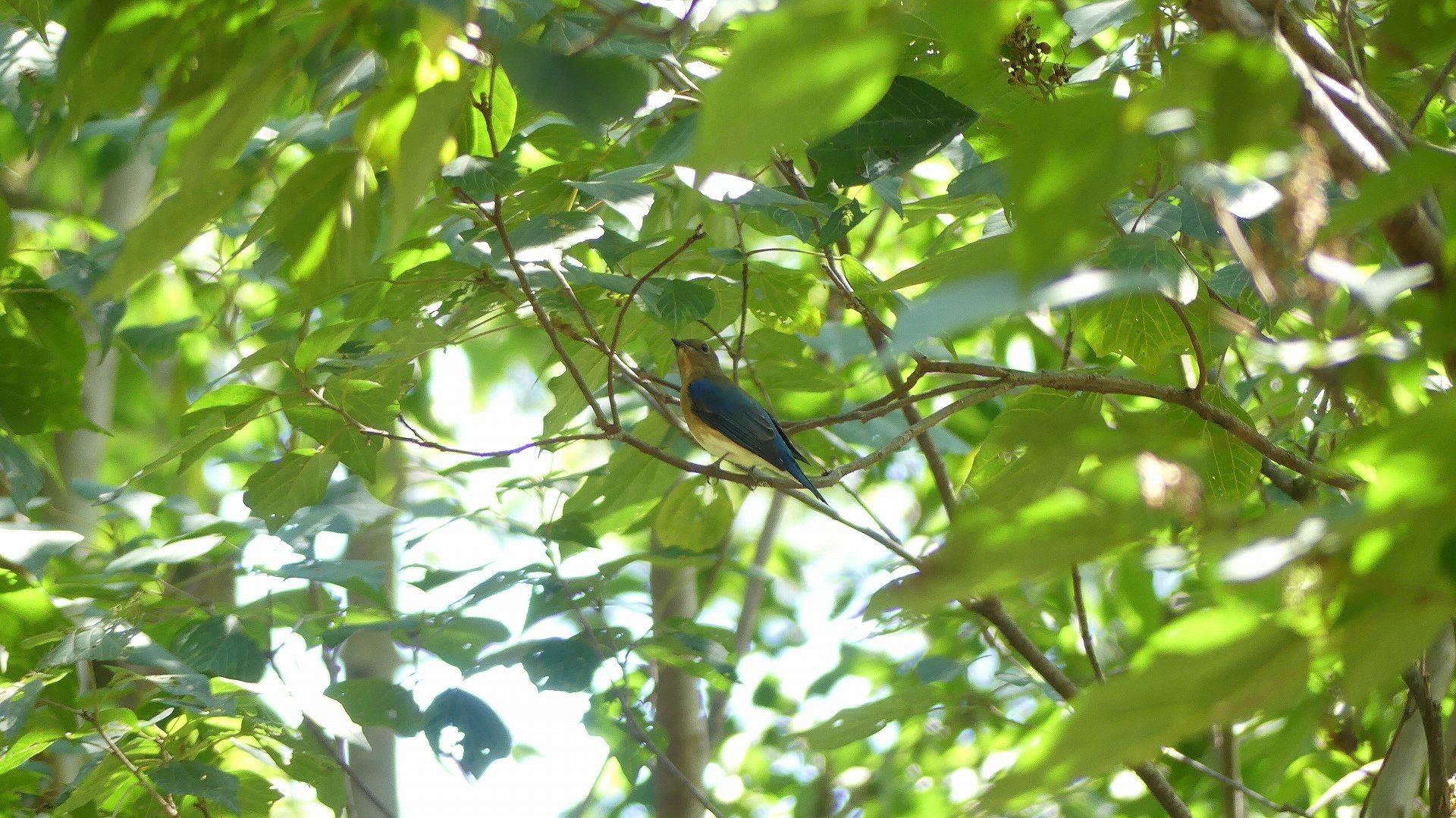 森の小鳥たち_a0185081_14322437.jpg