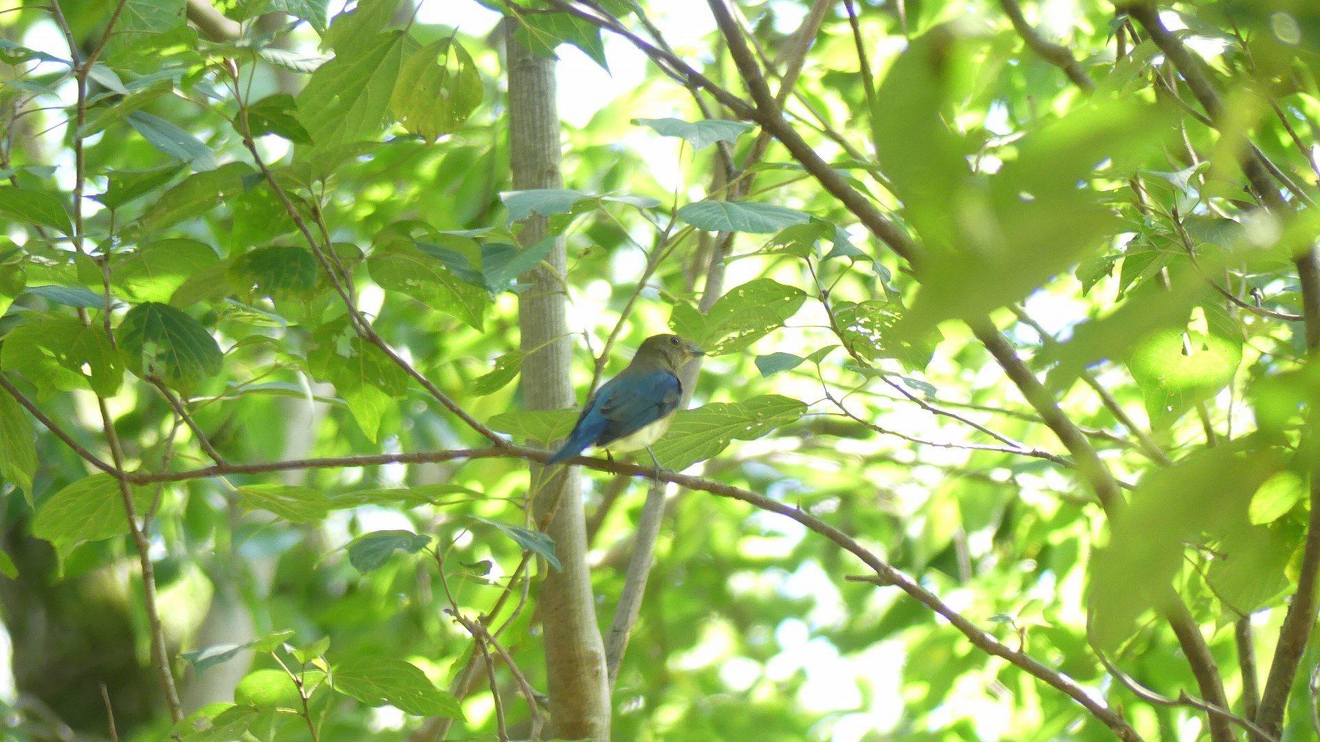 森の小鳥たち_a0185081_14324199.jpg