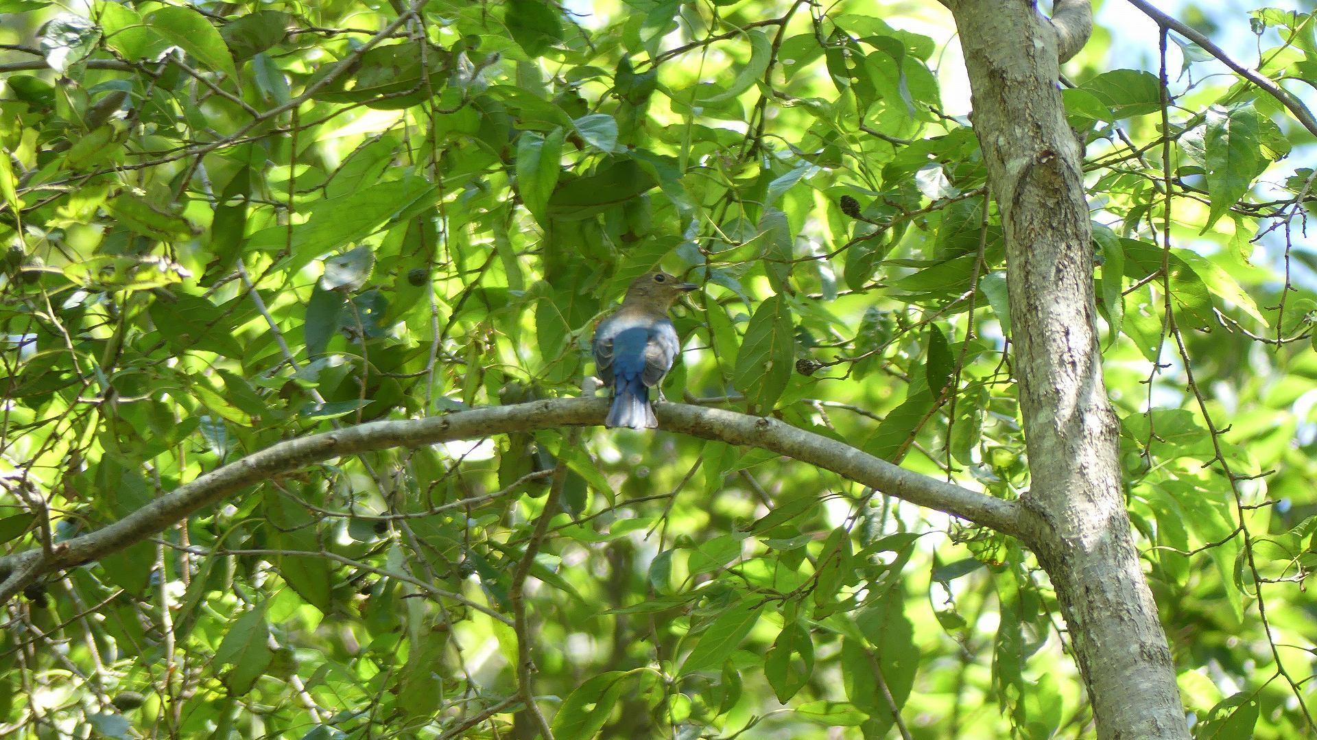 森の小鳥たち_a0185081_14331310.jpg