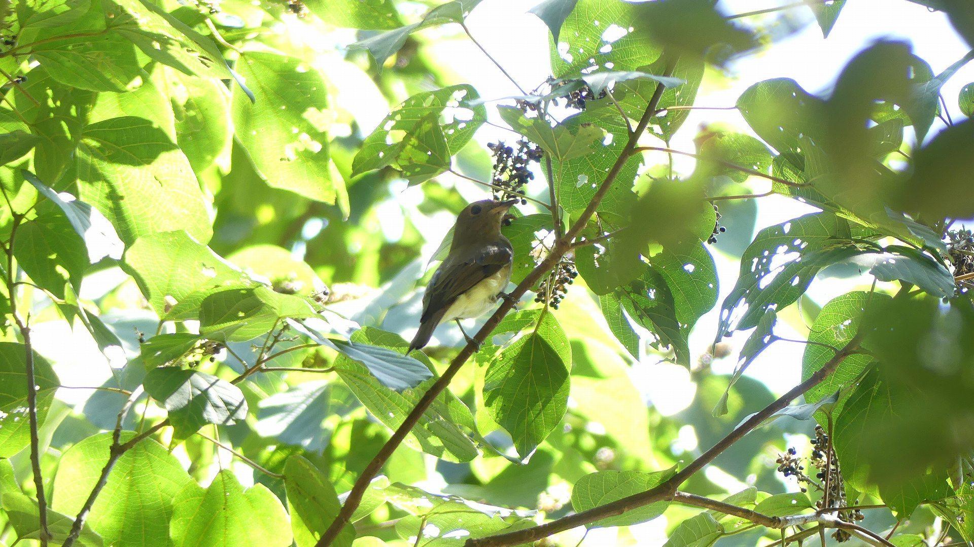森の小鳥たち_a0185081_14332978.jpg