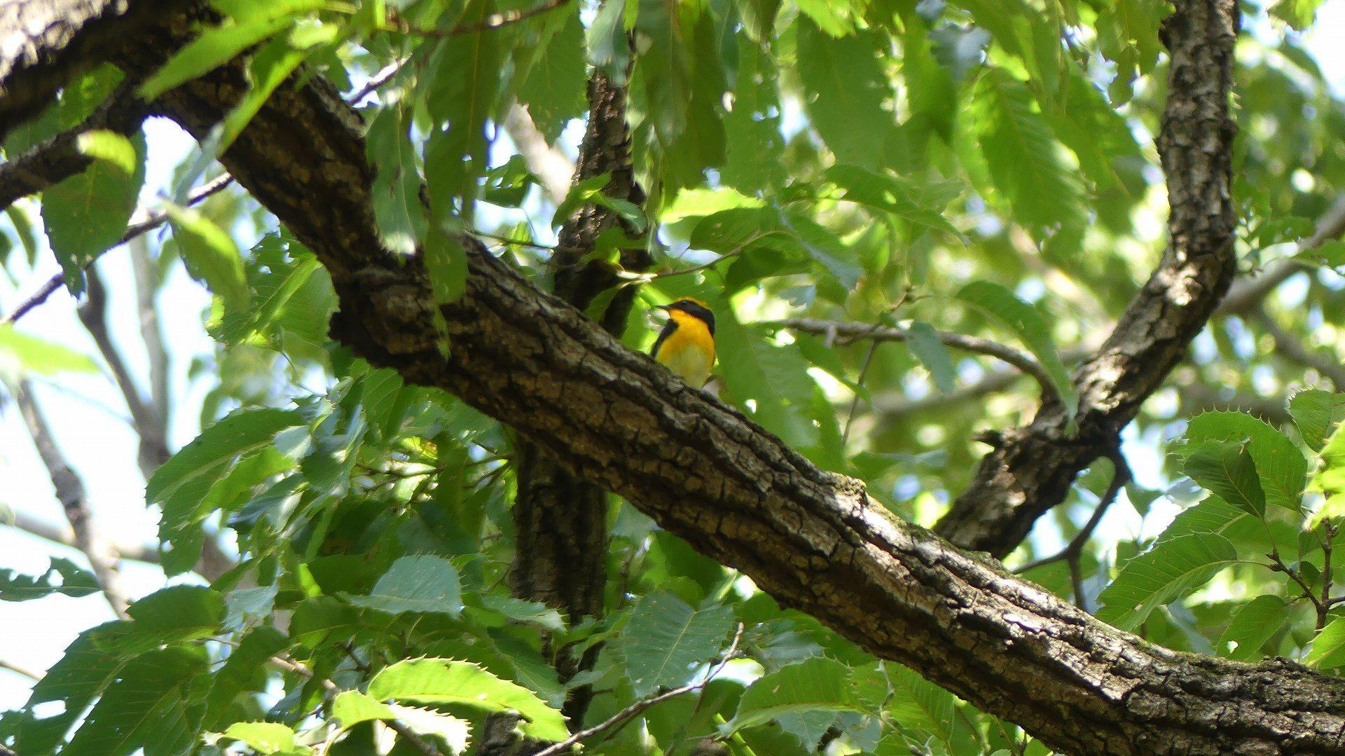 森の小鳥たち_a0185081_14334552.jpg