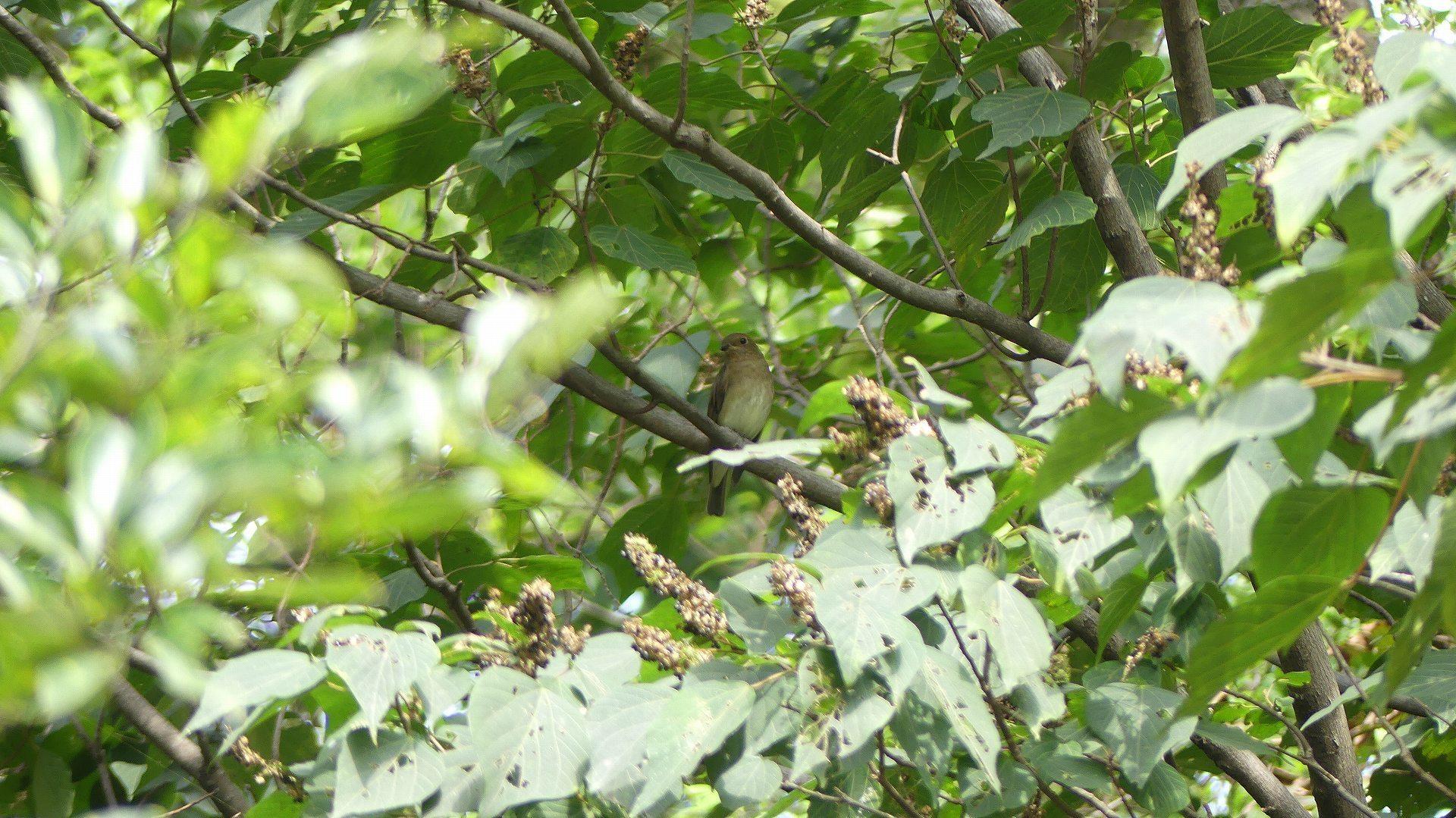 森の小鳥たち_a0185081_14335859.jpg