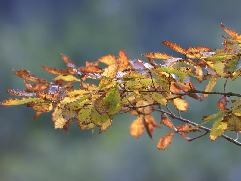 秋色のゴジュウカラ_a0204089_2343044.jpg
