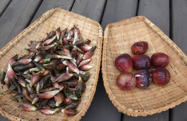 夏から秋、庭の恵みはブドウ、イチジク、ミョウガ等々♪_a0136293_16065262.jpg