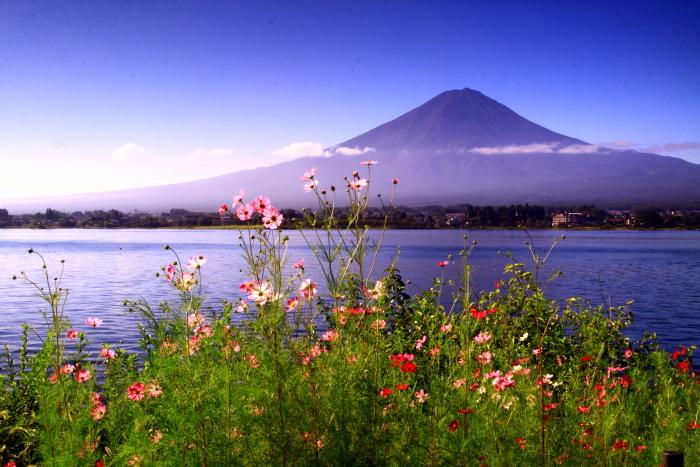 令和元年9月の富士(24)河口湖のコスモスと富士_e0344396_17260702.jpg