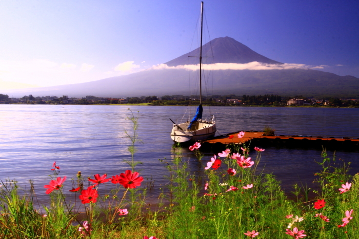令和元年9月の富士(24)河口湖のコスモスと富士_e0344396_17262282.jpg