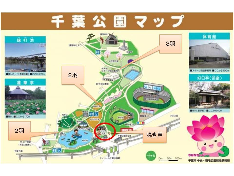 カラスの鳴き声がするほうへ ~千葉公園~【鳥獣対策ブログ】_a0321697_10250505.jpg