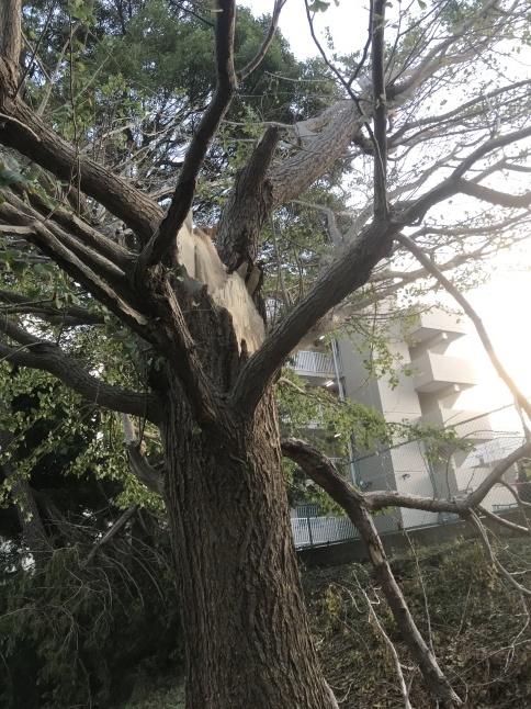 カラスの鳴き声がするほうへ ~千葉公園~【鳥獣対策ブログ】_a0321697_10253817.jpg