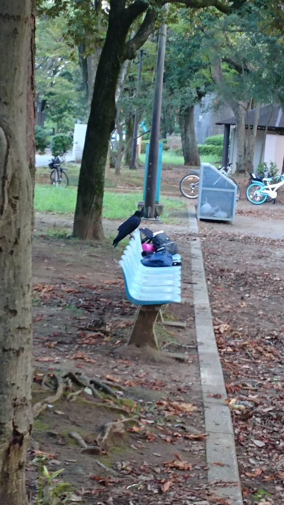 カラスの鳴き声がするほうへ ~千葉公園~【鳥獣対策ブログ】_a0321697_10262909.jpg