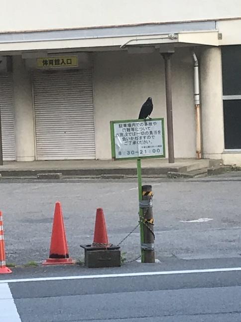 カラスの鳴き声がするほうへ ~千葉公園~【鳥獣対策ブログ】_a0321697_10264652.jpg
