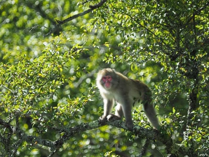 野猿と遭遇する日_f0224100_09320895.jpg
