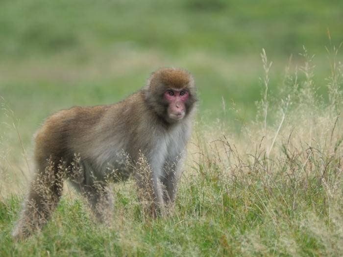 野猿と遭遇する日_f0224100_09322649.jpg
