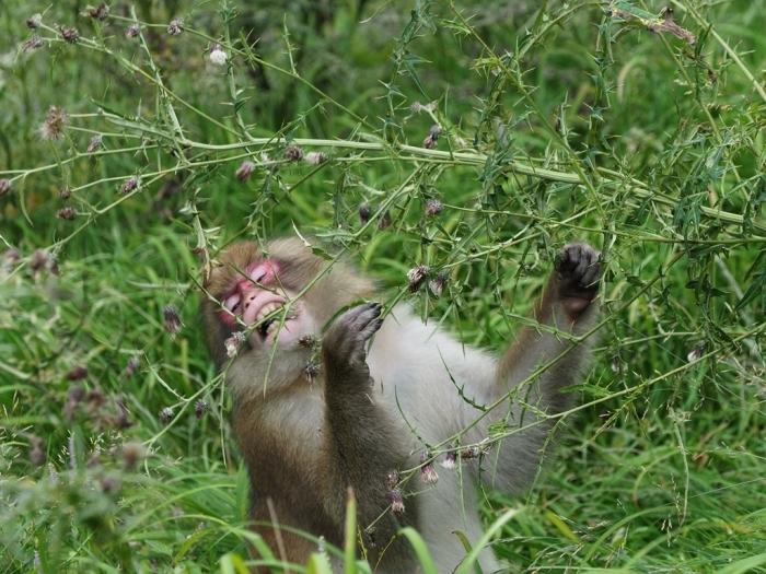 野猿と遭遇する日_f0224100_09323464.jpg