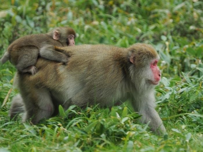 野猿と遭遇する日_f0224100_09324505.jpg