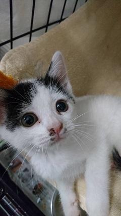 【ご協力のお願い】センターの猫用トイレ_f0242002_16244818.jpg