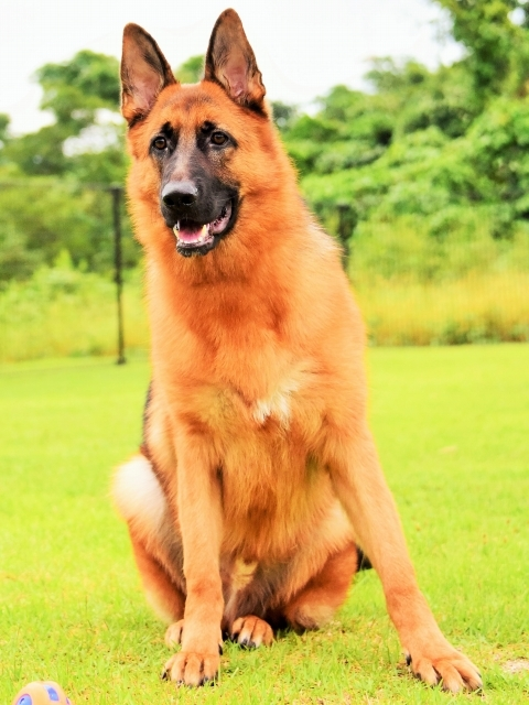 大型犬は苦労する_d0360206_00234081.jpg