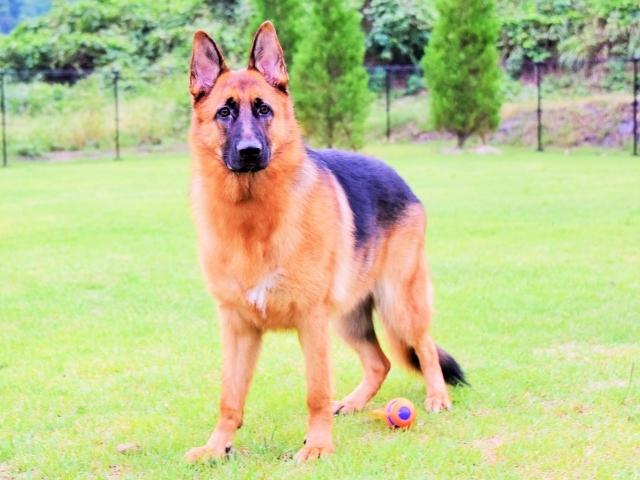 大型犬は苦労する_d0360206_00234612.jpg