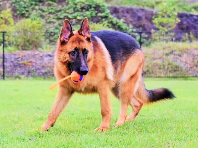 大型犬は苦労する_d0360206_00235073.jpg