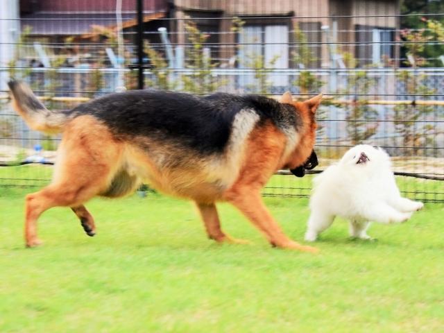 大型犬は苦労する_d0360206_00235804.jpg