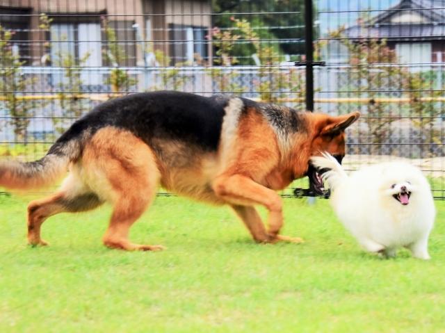 大型犬は苦労する_d0360206_00240376.jpg