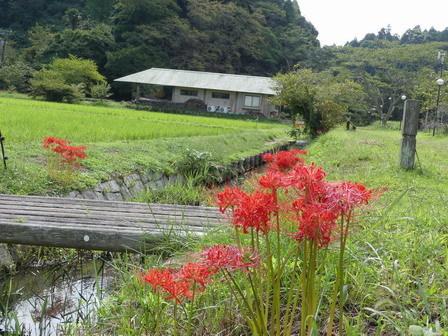 竹とんぼづくりと秋の自然観察_a0123836_15565821.jpg