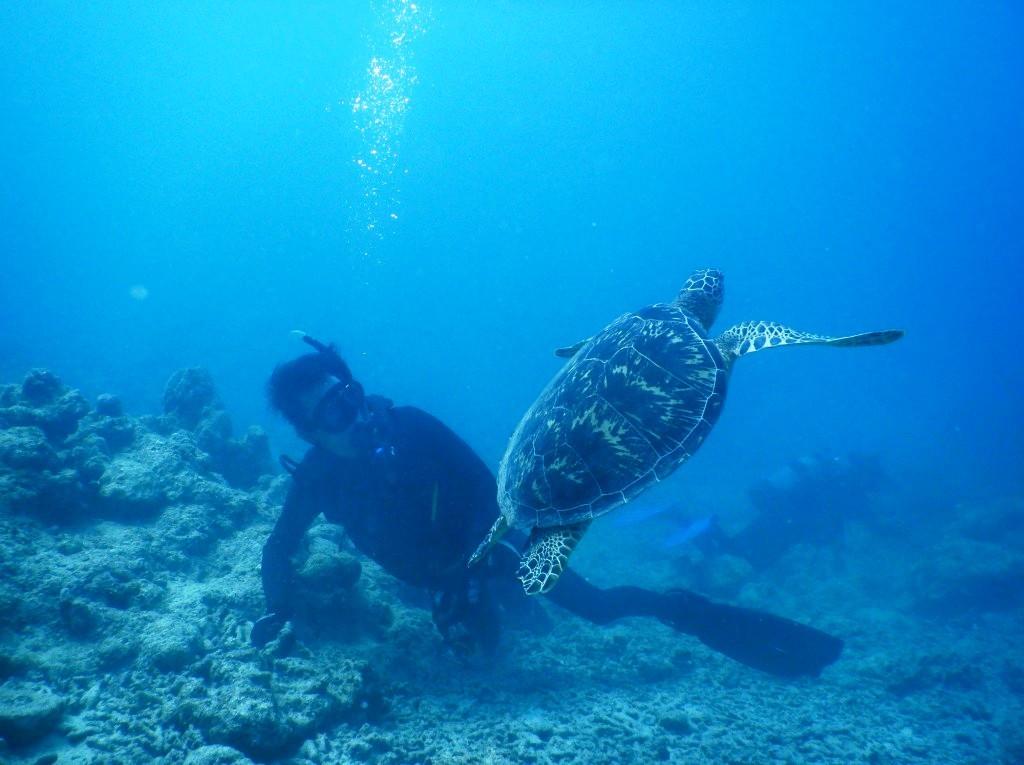 もう一度ウミガメに会いたいっ!(^^)!_a0189838_06190323.jpg