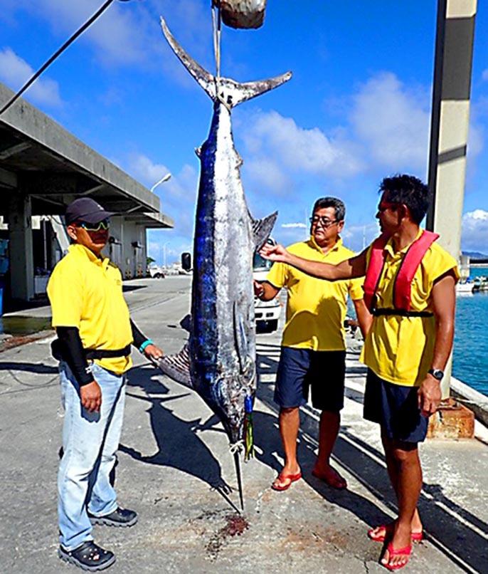 沖縄は好調、クロカジキとフウライカジキ_f0009039_10151345.jpg