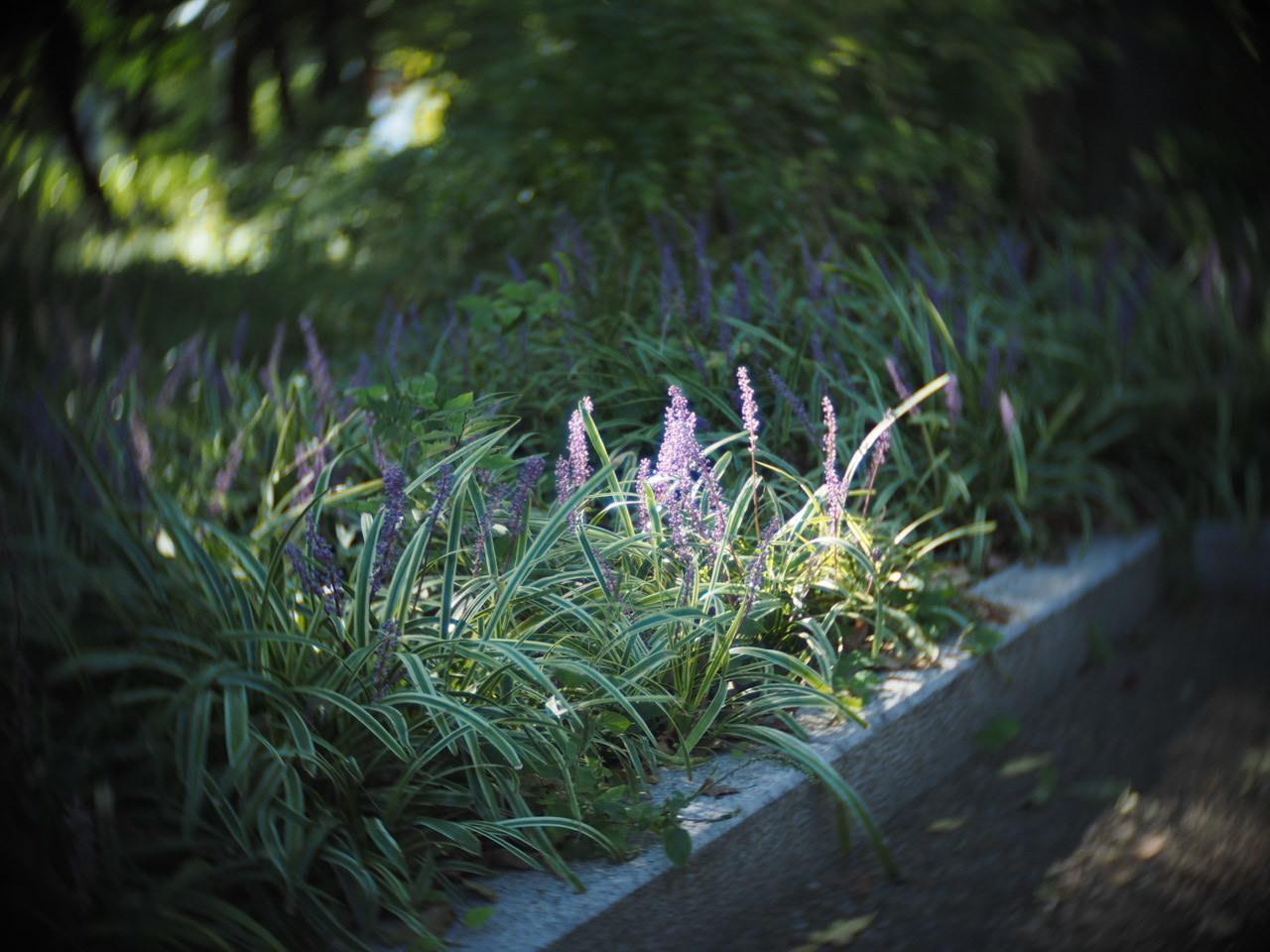 靱公園をグルグルレンズでさんぽ_f0135940_16504728.jpg