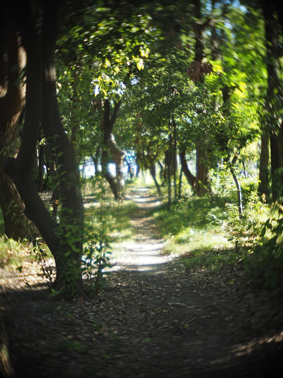 靱公園をグルグルレンズでさんぽ_f0135940_16505258.jpg