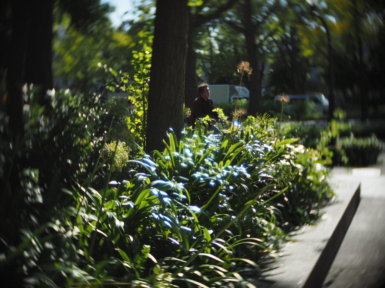 靱公園をグルグルレンズでさんぽ_f0135940_16505868.jpg
