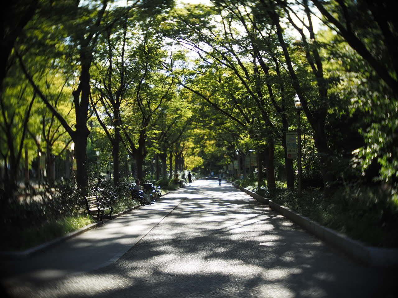 靱公園をグルグルレンズでさんぽ_f0135940_16514623.jpg