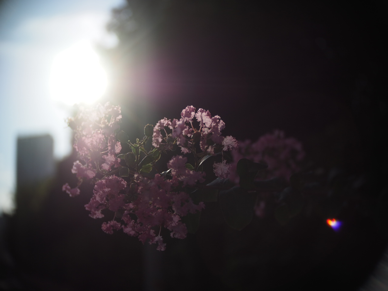 靱公園をグルグルレンズでさんぽ_f0135940_16515453.jpg