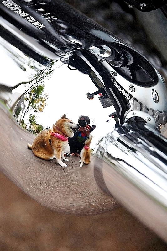 柴犬ライダー_b0314043_07042623.jpg