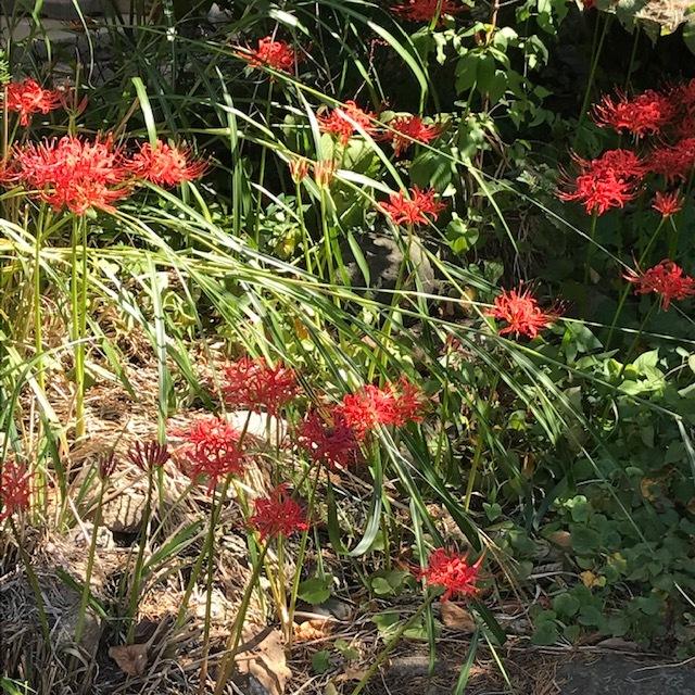 秋の花です。_e0226943_22445174.jpg