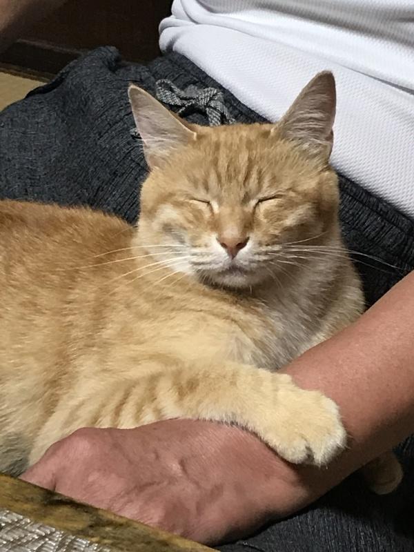 ♫今日~でお別れね~~♪「預かり猫ちゃんがかえります。」編_e0359584_08133059.jpg