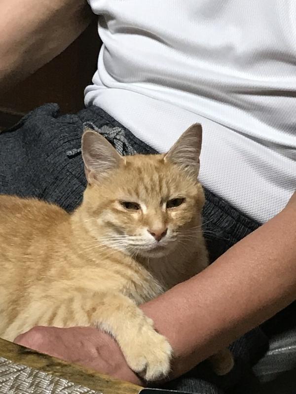 ♫今日~でお別れね~~♪「預かり猫ちゃんがかえります。」編_e0359584_08133105.jpg