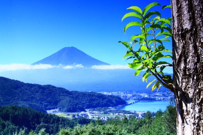 令和元年9月の富士(25)河口浅間神社の鳥居と富士_e0344396_16570483.jpg