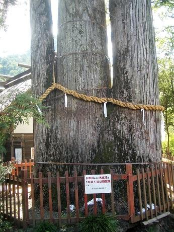 奥氷川神社_d0361999_11045885.jpg