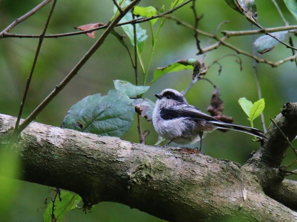小鳥が少しずつ見られる様になりました、_f0305401_14365876.jpg