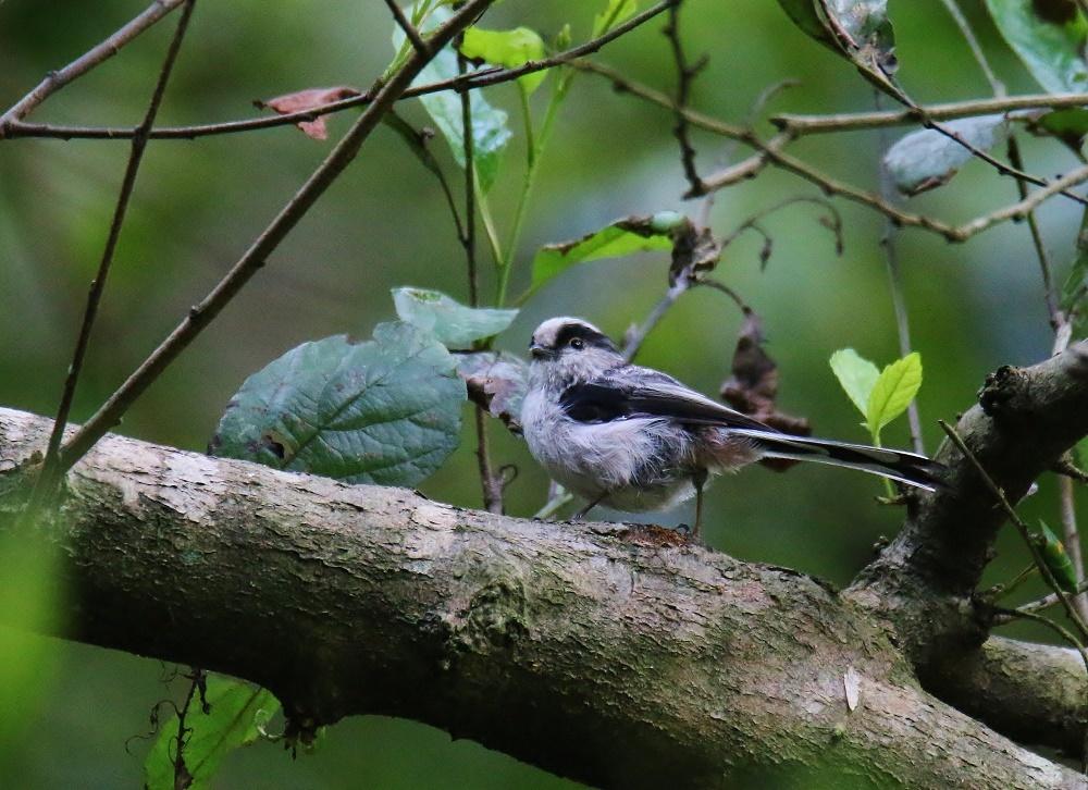 小鳥が少しずつ見られる様になりました、_f0305401_14370316.jpg