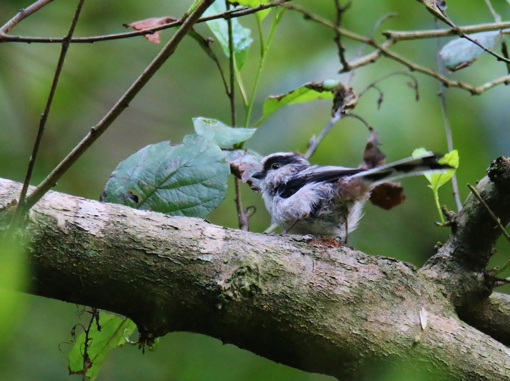 小鳥が少しずつ見られる様になりました、_f0305401_14372253.jpg