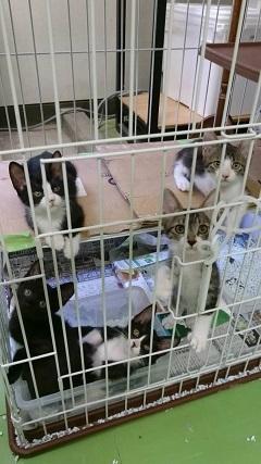 【ご協力のお願い】センターの猫用トイレ_f0242002_23405889.jpg