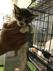 【ご協力のお願い】センターの猫用トイレ_f0242002_23422245.jpg