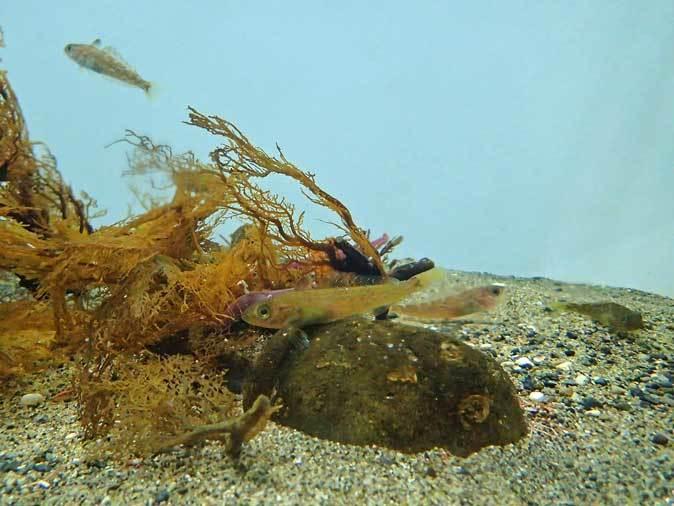 葛西臨海水族園~南極のダンゴムシとまったりヒトデ_b0355317_21564037.jpg
