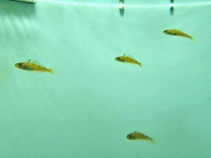 葛西臨海水族園~南極のダンゴムシとまったりヒトデ_b0355317_21570089.jpg