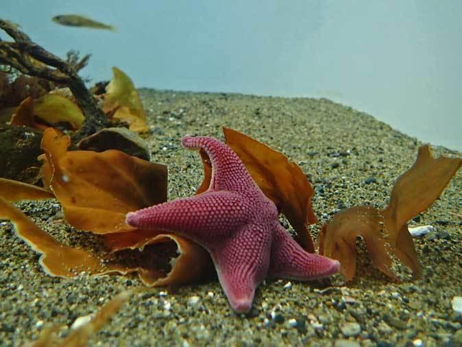 葛西臨海水族園~南極のダンゴムシとまったりヒトデ_b0355317_22060489.jpg