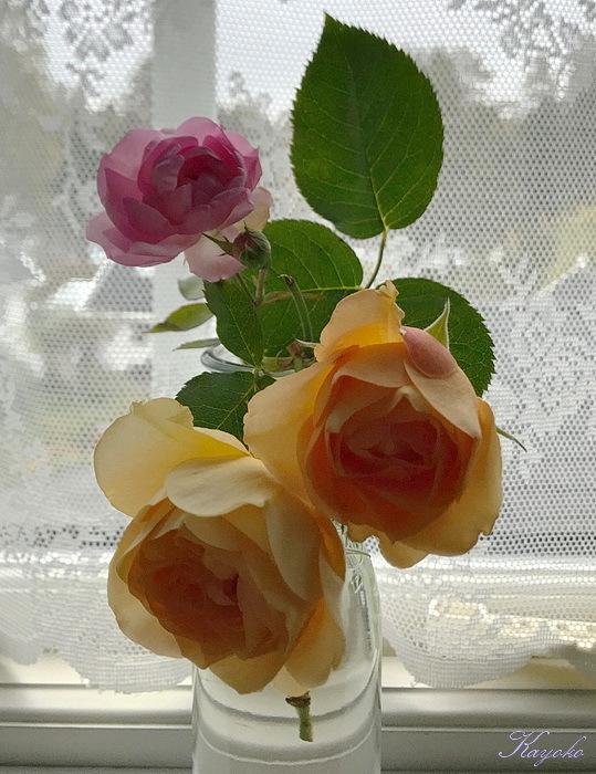 ブログ_a0353839_20140210.jpg
